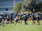 2016_Ladies_R6_Warringah__130
